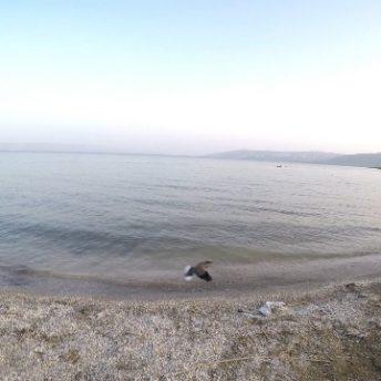 חוף חוקוק כנרת